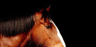 10 Gesundheitstipps die wir von Pferden lernen können